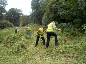 Himalayan balsam clearance Moorswork and Volunteers